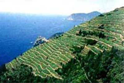 terraces1